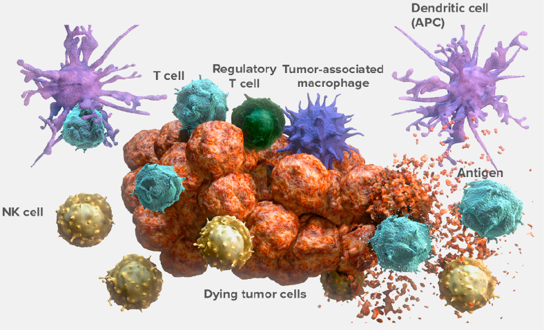 Central T-Cell Activation and Inhibition